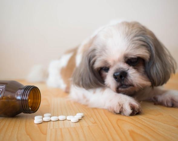 Veterinary Law Blog | Home - Mandelbaum Salsburg